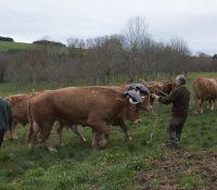 Carne de buey: Bodega El Capricho frente a Restaurante España