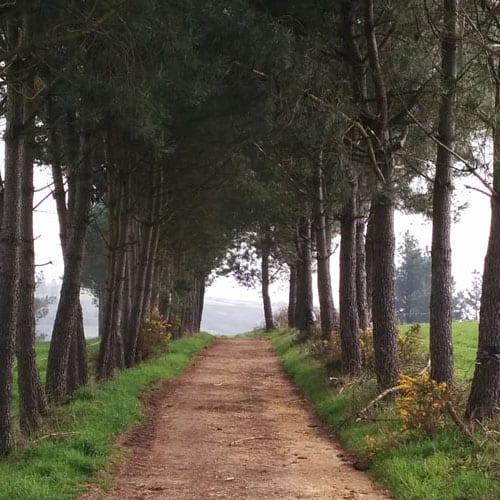 Etapa 28 Portomarín - Palas de Rei