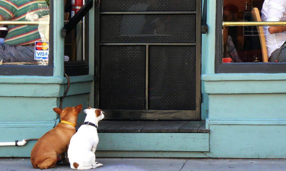 a-partir-de-mayo-los-perros-podran-entrar-en-los-restaurantes-de-portugal-1920