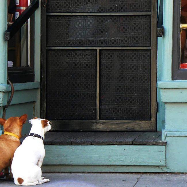 A partir de mayo los perros podrán entrar en los restaurantes de Portugal